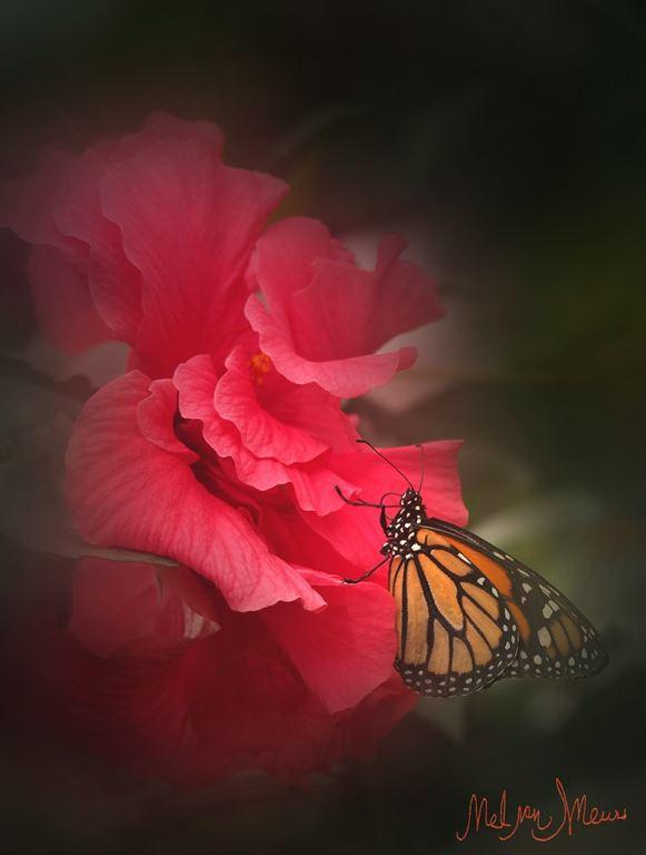 vlinderoproos